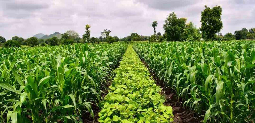 emena-climate-priorites-feed