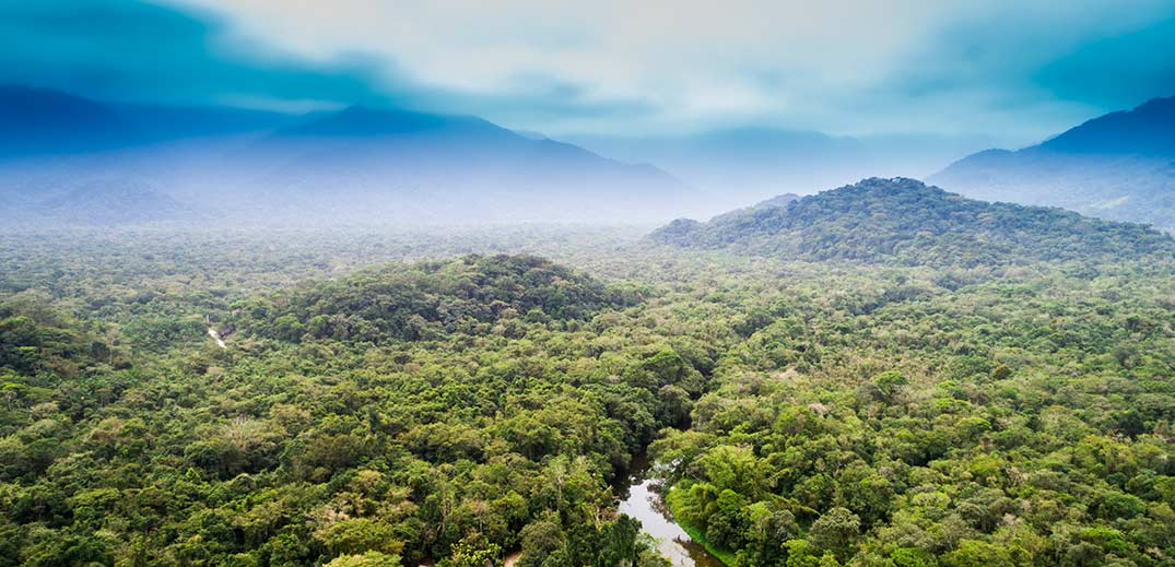 Nestle tropical forests