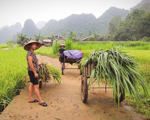 Vietnam's Ethnic Minorities in Rural