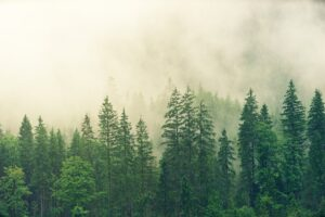 Forest and cloud